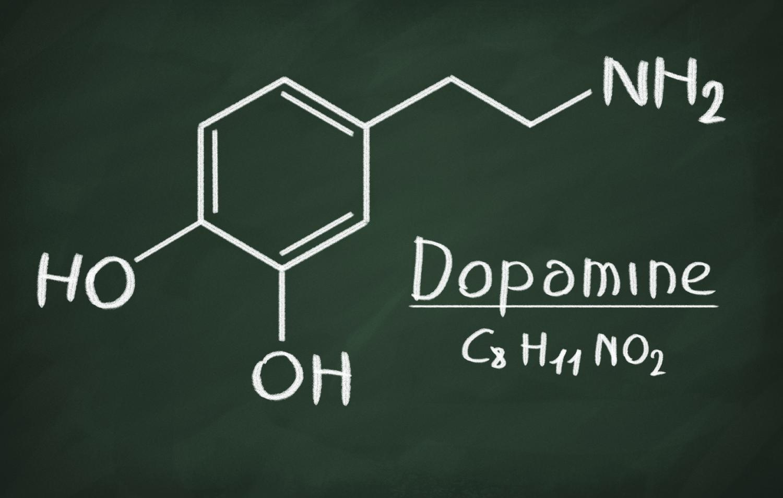Dopamine tastes good